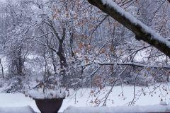winteryard